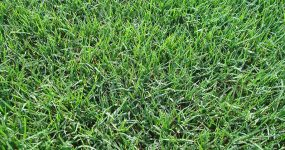 Bermuda-Grass-Lawn-Care-4